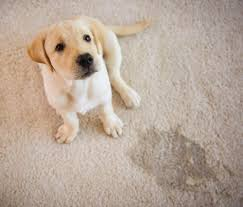 carpet cleaning deep cleaning urine stain remover steam cleaning carpet deodrizer cerritos